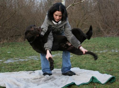 Hundeschule Potsdam  Erste Hilfe am Hund  Fixieren
