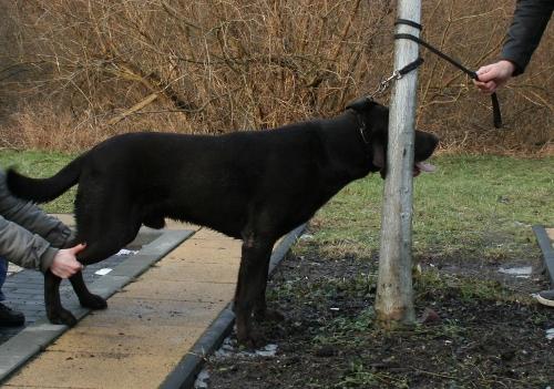 Hundeschule Potsdam  Erste Hilfe am Hund  Selbstschutz