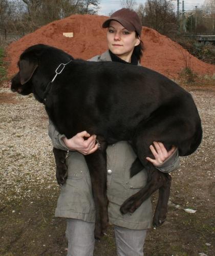 hundeschule potsdam erste hilfe am hund tragen heben. Black Bedroom Furniture Sets. Home Design Ideas